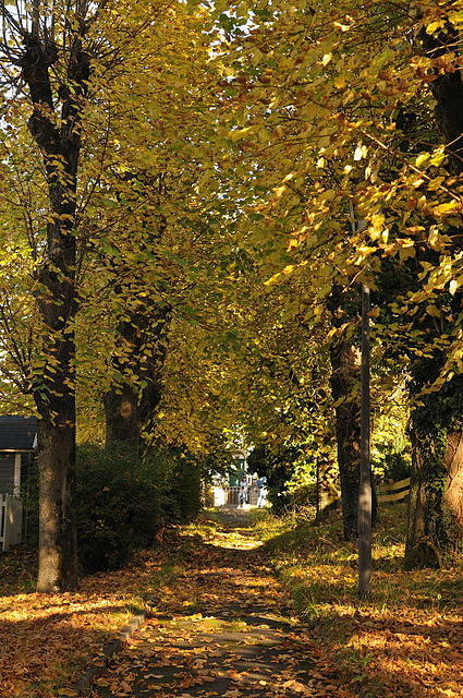 Lindenburgallee im Herbst